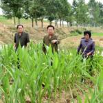 Čche Rjong He skontroloval škody spôsobené suchom v okrese Čerjong