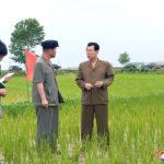 Súdruh Kim Če Rjong sa oboznámil so situáciou vpoľnohospodárstve